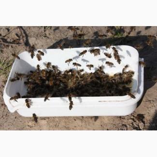 Соевая мука для пчел (соєве борошно) - лучшая белково-витаминная добавка