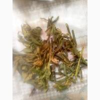 Чай с Алтая - Саган дайля, повышает давление, тоник