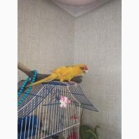 Какарик попугай