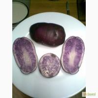 Продам картофель с синей и фиолетовой мякотью