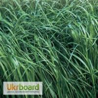 Продам Райграс однорічний - газонна трава - насінний матеріал (Райграс однолетний)