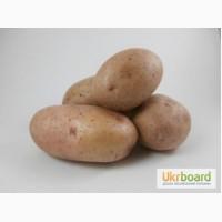 Продам картофель органический, домашний