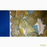 Черепаха черепашка, малята-черепашата, сухопутна середньоазійська черепаха
