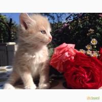 Отдам в хорошие руки маленьких котят