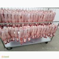 Куплю мясо кроля