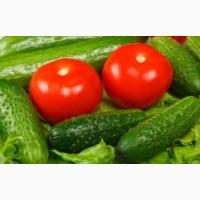 Купим помидоры тепличные в Молдове, Кишинев