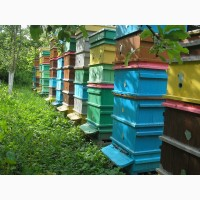 Пыльца пчелиная с Прикарпатья 2018г