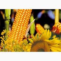 Куплю кукурузу, семечку масленичную
