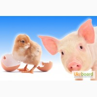 Выращивание свиней на заказ