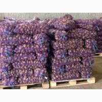 Продаж картоплі опт та роздріб