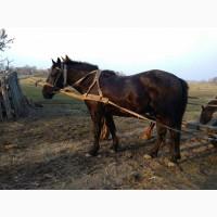 Продам коня 3 роки спокійний