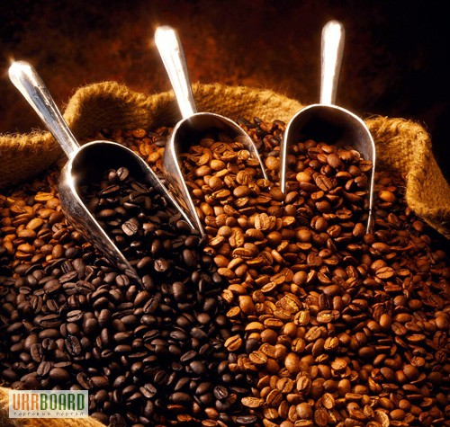 Arabica coffee plant safe for cats