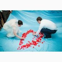 Ведущая, тамада на свадьбу, музыка, фото, видео