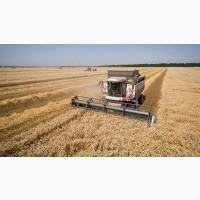 Покупаем оптом пшеницу 2-4 класса
