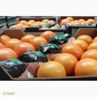 Грейпфрут оптом (Турция)
