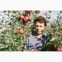 Саджанці плодових, декоративних культур одно-трьох річні