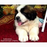 Московская Сторожевая 2 мес. Документы Доставка