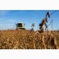 Уборка льна кукурузы подсолнечника соняшника сои Староконстантинов Хмельницкий Теофиполь