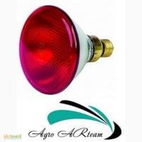 Инфракрасная лампа 150 Вт красная PAR (Польша)