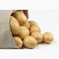 Закупка картофеля на месте с доставкой