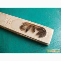 Продам пчеломаток,порода карпатские и степная украинская