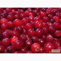 Клюква, та інші ягоди і фрукти шокової заморозки