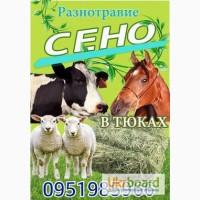 Бесплатная доставка сена в тюках по Украине. Люцерна, луговое