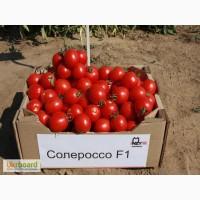 Семена томата Солероссо F1 (Solerosso) Упаковка 1000 семян