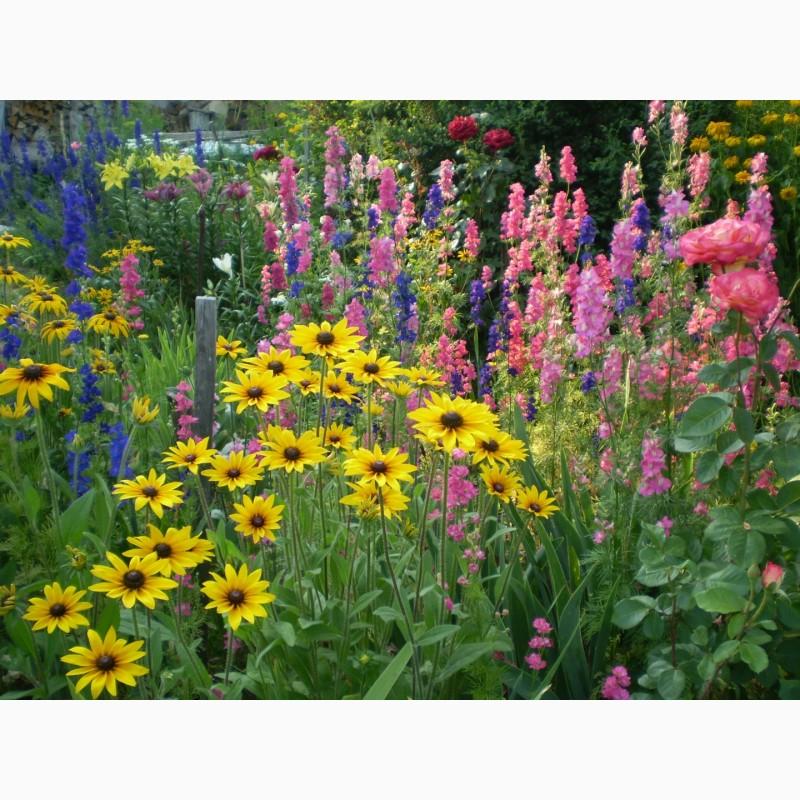 Фото 15. Многолетние цветы для Вашего сада весна 2018