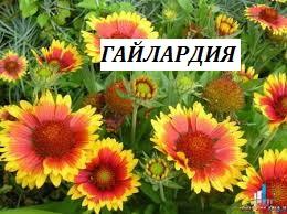 Фото 8. Многолетние цветы для Вашего сада весна 2018