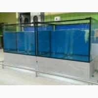 Аквариум Для Торговли Морской Рыбой 5
