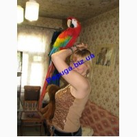 Элитные попугаи из питомника