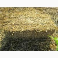 Продам солому пшеничную тюках