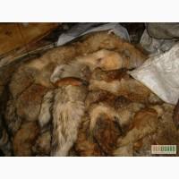 Кплю дорого оптом и в розницу шкуры кроля,лисы,нутрии,ондатры и др.