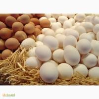 Яйца куриные столовые