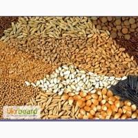 Производим и экспортируем семена овощей и сельхозпродукции в другие страны