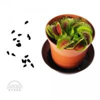 Семена Венериной мухоловки Дионеи - хищные растения
