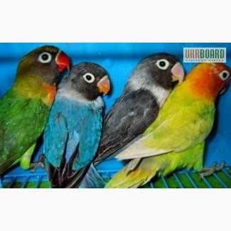 Попугаи всех пород