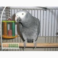 Клетки и вольеры для попугаев Террариумы разных размеров