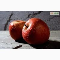 Продам, яблоки, летние сорта производства Украина.опт.