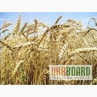 Насіння ярого ячменю, гороху, гречки, овса, ярої пшениці
