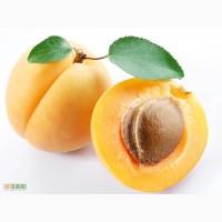 Продаем абрикос с. Радсад