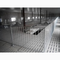 Станки для группового содержания свиней