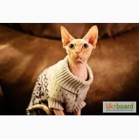 Одежда для кошек под заказ