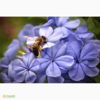 Пчелосемьи, пчелопакеты, продукты пчеловодства