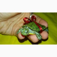 Маленькие красноухие черепашки 4-5см.Доставка по всей Украине