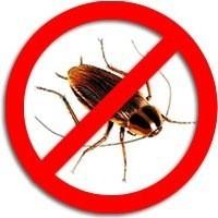 Уничтожение клопов, тараканов, других насекомых