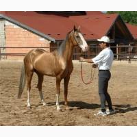 Требуется конюх на ферму во францию