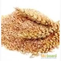Висівки пшеничні, макуху соняшника