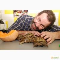 Черепашки сухопутные опт и розница, черепаха